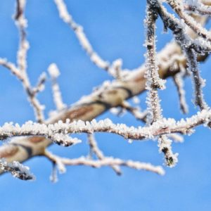 Hof Surmann – Die Stromberger Pflaume im Winter